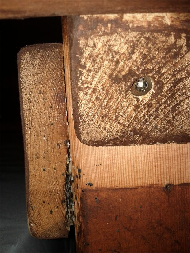 Pictures Of Bed Bug Eggs On Wood Kidskunst Info